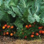Природное земледелие на садовом участке